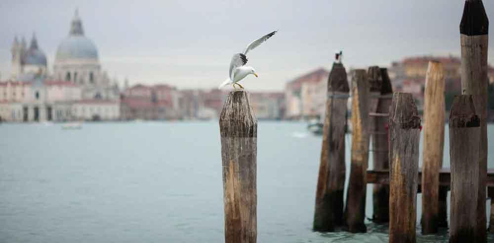 Gabbiano Venezia - Devincenti negozio arredamento Verona